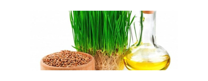 Масло Зародышей пшеницы доставим